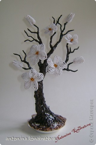 Веточка цветущей сливы