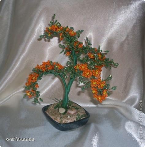 оранжевенькое.. фото 1
