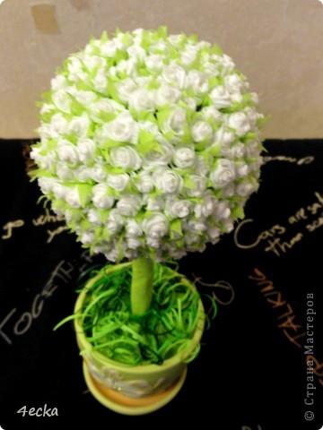 Белое дерево фото 3
