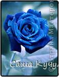 Выберите цвета вашей розы Красная фото 2