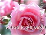 Выберите цвета вашей розы Красная фото 3