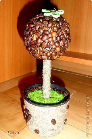 Кофейные деревья фото 2