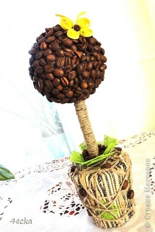 Кофейные деревья фото 4