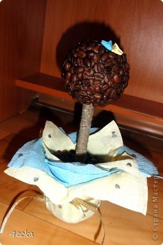 Кофейные деревья фото 5