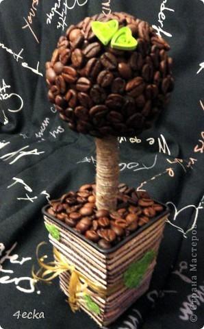 Кофейные деревья фото 7