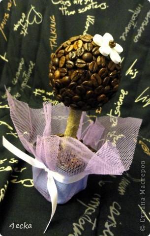 Кофейные деревья фото 6