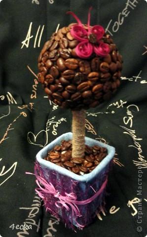 Кофейные деревья фото 8