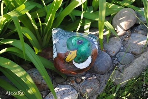 Вот такие новые камушки-зверушки украшают теперь наш сад... фото 2