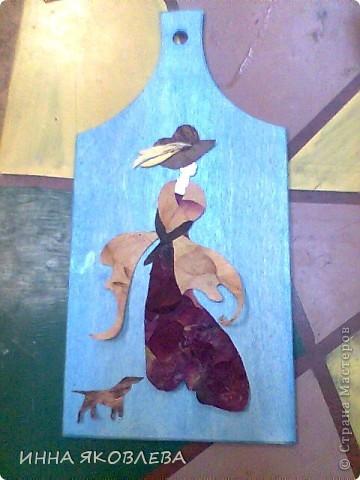 Дельфиниум, акация, кукуруза фото 4