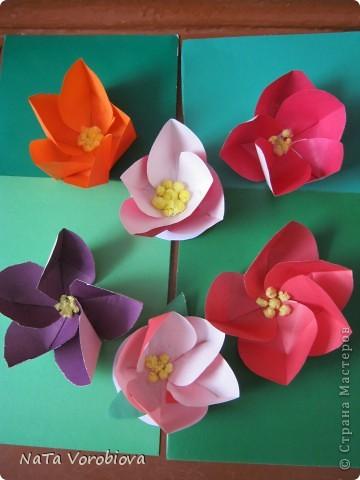 Цветочная полянка фото 2