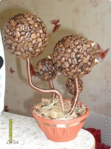 """Здравствуйте, Мастерицы. Сегодня я хочу показать Вам свои работы с кофе. Первое деревце сделано специально для Верочки (Мадамочка). Делала долго..... Все никак не могла понять ЧТО именно я хочу получить в итоге. Хотелось сделать такую работу, которую жабно отдавать. Работу """"как для себя-любимой"""". У меня получилось! Два дня любовалась и все никак не могла в коробочку упаковать и отправить. ( Хм..... Скромная я, да? ) ☺☺☺ фото 11"""
