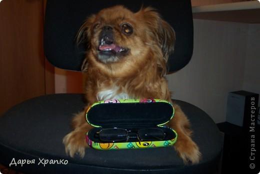 Это моя любимая собачка Чита! Ее порода японский хин. Я расскажу о ней поподробней. фото 4