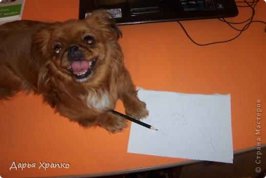 Это моя любимая собачка Чита! Ее порода японский хин. Я расскажу о ней поподробней. фото 6