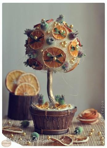 """Плодовые деревья """"Яблоко,апельсин""""!!! фото 1"""