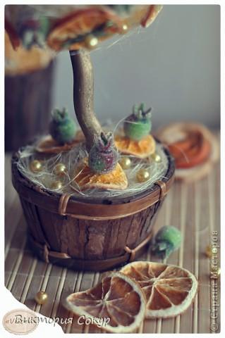 """Плодовые деревья """"Яблоко,апельсин""""!!! фото 3"""