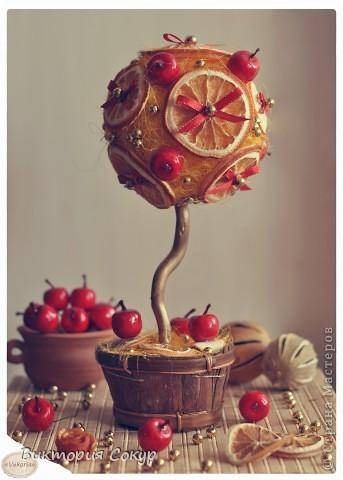 """Плодовые деревья """"Яблоко,апельсин""""!!! фото 4"""