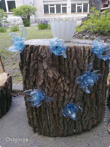Решили мы со старшей дочерью сделать подарок нашему садику на выпускной. Наделали вот таких вот цветочков из пластиковых бутылок и стаканчиков из-под сметаны и плавленного сыра. Всё собрали на саморезы, чтоб можно было прикрепить к пенькам, которых после санитарного спила деревьев в саду оказалось приличное количество. фото 4