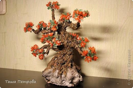 Цветущий бонсай фото 1