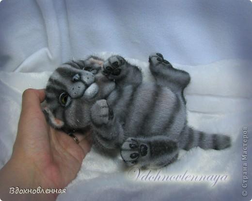 Родились такие лапусики пузатенькие)) фото 10