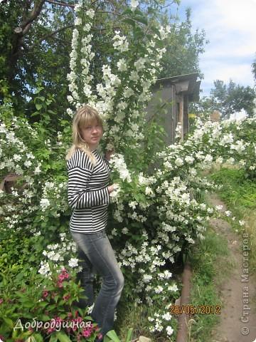 Поделюсь с вами красотой нашей дачи.... Жасмин в цвету. Ну и я рядом =) фото 1