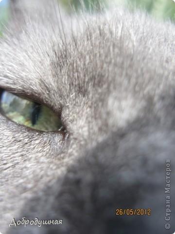 Поделюсь с вами красотой нашей дачи.... Жасмин в цвету. Ну и я рядом =) фото 8