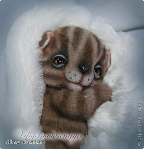 Родились такие лапусики пузатенькие)) фото 6