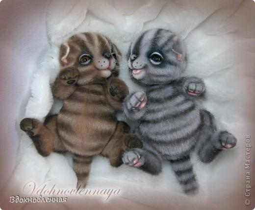 Родились такие лапусики пузатенькие)) фото 1