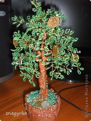 еще денежные деревья фото 1