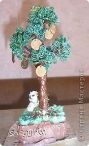 еще денежные деревья фото 2