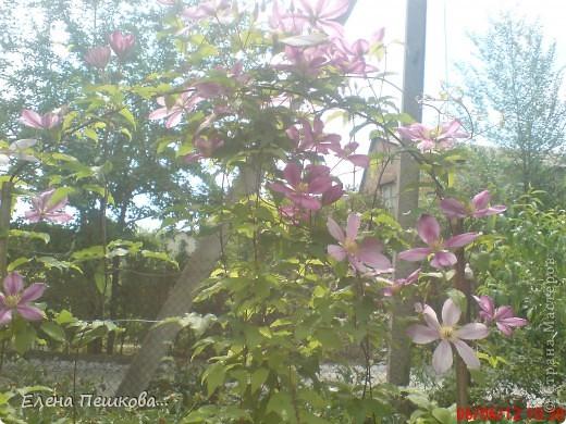 Вот такие цветы на моей даче. фото 1
