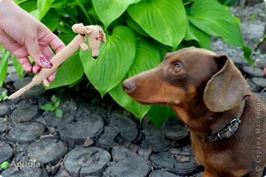 Вот такие смешные браслетики я связала по описанию в Интернете: http://uroki-vjazanija.blogspot.com/2011/10/taksa-braslet.html По-моему, крыска и такса подружились! фото 7