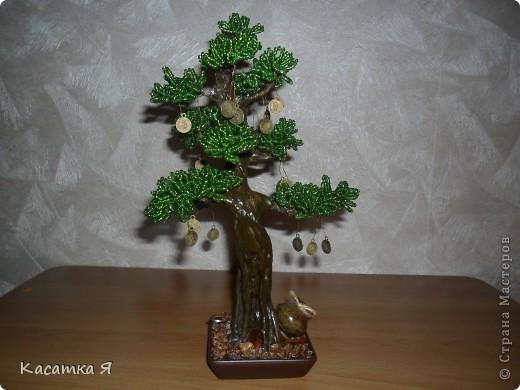 Денежный бонсай. фото 2