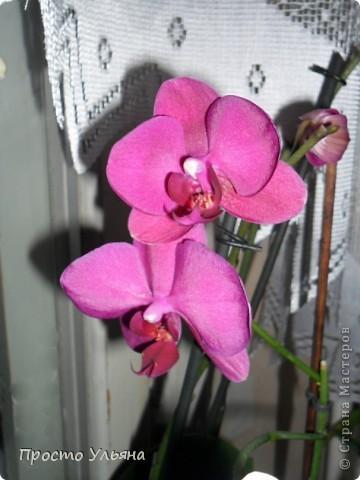 """Здравствуйте всем))Вот решила я показать вам зелёное окружение нашей семьи,моя мама очень любит цветы и я покажу вам её приёмных или уже даже как родных """"деток!!Ну что начнём!!!?Это фаленопсис, если просто то орхидея) фото 1"""