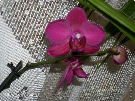 """Здравствуйте всем))Вот решила я показать вам зелёное окружение нашей семьи,моя мама очень любит цветы и я покажу вам её приёмных или уже даже как родных """"деток!!Ну что начнём!!!?Это фаленопсис, если просто то орхидея) фото 7"""