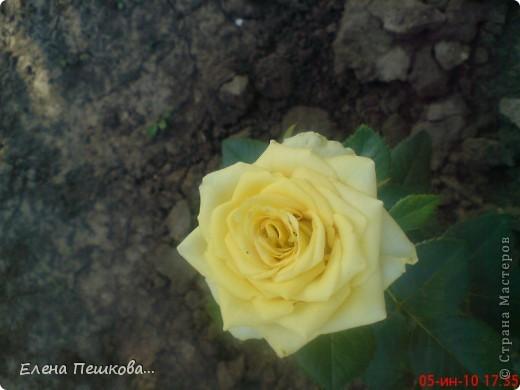 Вот такие цветы на моей даче. фото 4