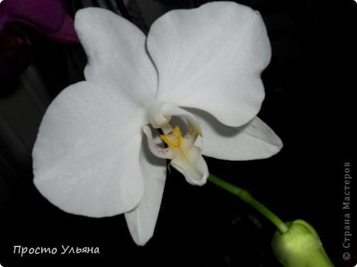"""Здравствуйте всем))Вот решила я показать вам зелёное окружение нашей семьи,моя мама очень любит цветы и я покажу вам её приёмных или уже даже как родных """"деток!!Ну что начнём!!!?Это фаленопсис, если просто то орхидея) фото 21"""