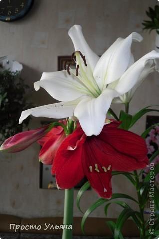 """Здравствуйте всем))Вот решила я показать вам зелёное окружение нашей семьи,моя мама очень любит цветы и я покажу вам её приёмных или уже даже как родных """"деток!!Ну что начнём!!!?Это фаленопсис, если просто то орхидея) фото 28"""