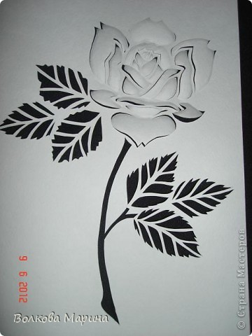 Розочка. В моём любимом чёрно-белом стиле.  фото 1