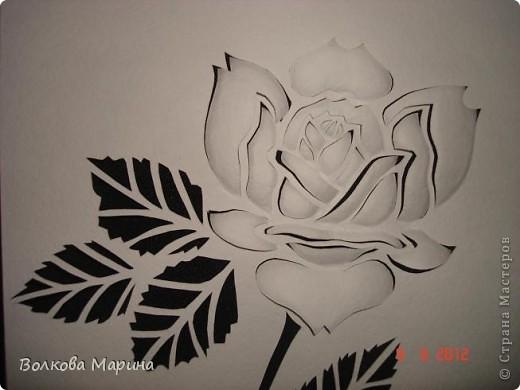 Розочка. В моём любимом чёрно-белом стиле.  фото 3