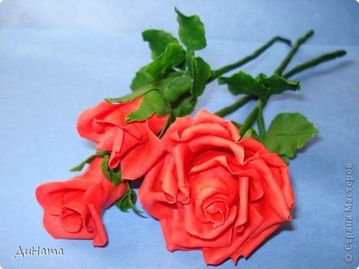 обычные розы фото 1