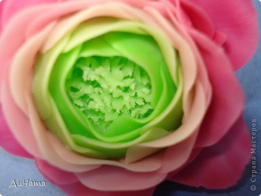 обычные розы фото 5