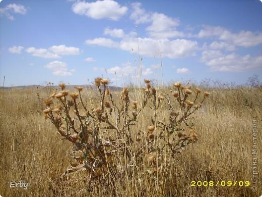 Моя прелестная поляна фото 24