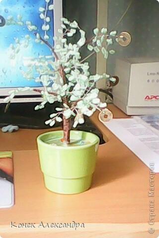 Вот такое денежное дерево! фото 23