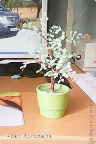 Вот такое денежное дерево! фото 1