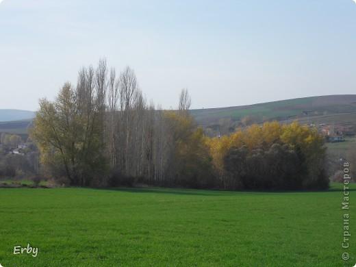 Моя прелестная поляна фото 9