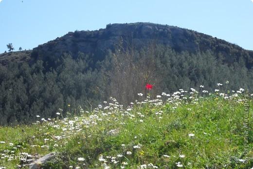 Моя прелестная поляна фото 11