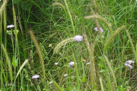 Моя прелестная поляна фото 17