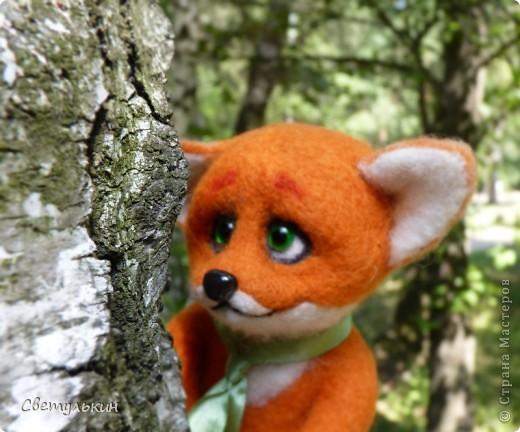 Любопытный лисёнок и другие...) фото 3
