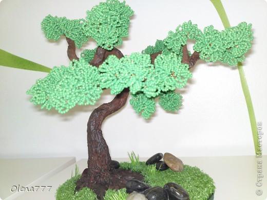 Доброго дня и ночи, жители Страны Мастеров! Это моё третье дерево. Теперь и у меня есть бонсай! Ну, о работе судить вам. Буду благодарна за любые комментарии. Высота дерева 21см. фото 2