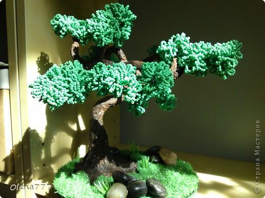 Доброго дня и ночи, жители Страны Мастеров! Это моё третье дерево. Теперь и у меня есть бонсай! Ну, о работе судить вам. Буду благодарна за любые комментарии. Высота дерева 21см. фото 4